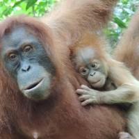 Une maman et son petit