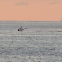 Baleine du soir... Bonsoir !