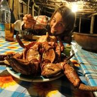 Face à face avec un crabe des cocotiers