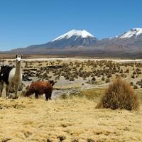 Une vue magnifique sur la frontière chilienne