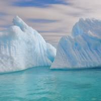 Petit bleu d'iceberg